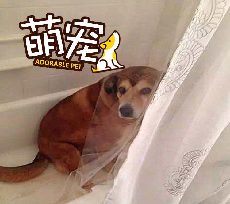 【萌宠】据说每个会躲在浴室里的汪,一定有一个血淋淋的犯罪现场!