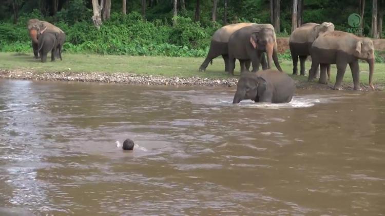 惭愧!人类捕杀大象,大象见人溺水却在爆冲抢救