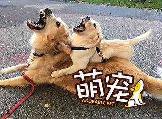 """【萌宠】汪星人实力演示什么叫""""有其父必有其子""""!"""