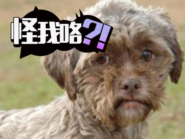 狗狗因为长得太像人类,没人领养还吓哭小孩