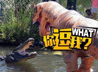 玩命,小伙假扮霸王龙戏弄水中鳄鱼
