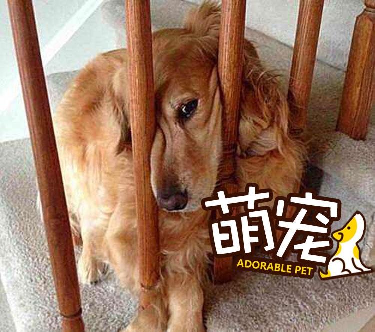 【萌宠】萌宠们和楼梯,相信我,楼梯没那么可怕啦!
