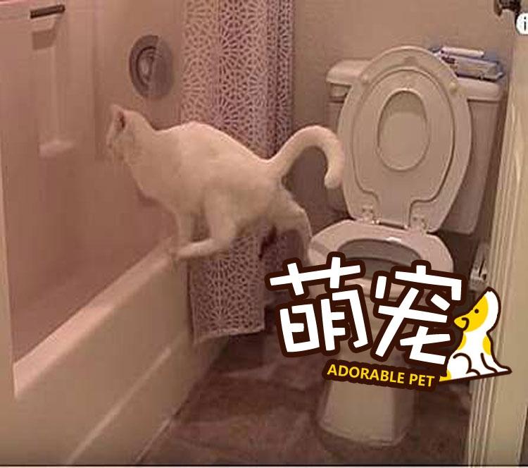 """【萌宠】洁癖喵星人模仿主人上厕所,不料""""黄金""""却掉到地上了!"""