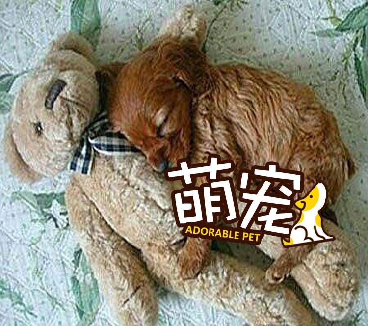 【萌宠】我还是个宝宝,我也要抱娃娃睡觉!