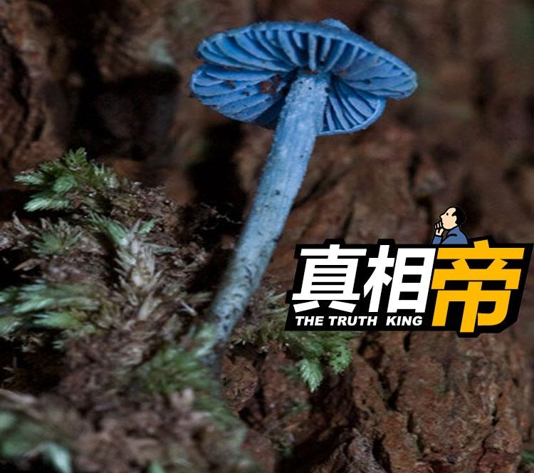 【真相帝】What?原来蓝瘦香菇真的存在,还有很大的作用呢!