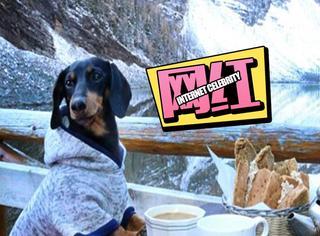 """加拿大腊肠犬的惬意""""狗""""生:远足美甲样样不少"""