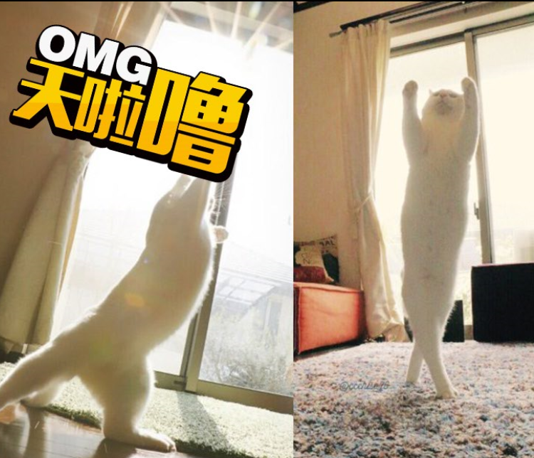 惊呆了!这只猫咪会跳舞,还出了教学版!