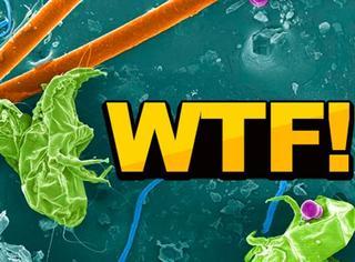 近600余种虫子在你的家里游走,你竟没发现!
