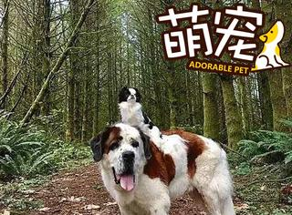 【萌宠】快看,这只大狗背着小狗私奔了!