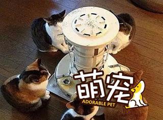 【萌宠】冬天喵星人唯一的正经事也就是烤烤脸了!