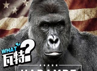 美国总统大选至少有上万人投给了已故的大猩猩Harambe