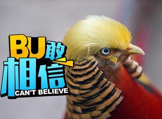 大自然最像川普的物种全在这里了,中国一山鸡夺魁