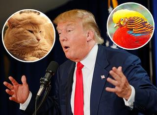 特朗普的总统之路,蜜汁发型撞上了一片动植园!