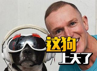 外国男子把狗当女儿养,这宠溺是上天了!