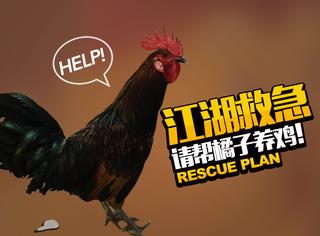 告示:江湖救急!问世间谁来拯救橘子的鸡鸡!