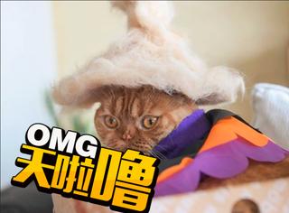 喵咪戴上自己的毛帽都超萌!