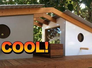 美国设计师为小鸟打造别墅,太精致太美