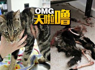她把14只猫锁家里,因为太饿它们互相吃掉对方,只剩1只