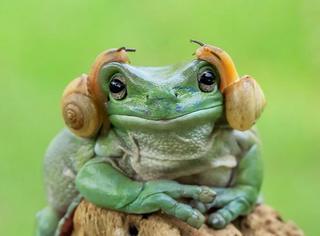 他拍出你从未见过的青蛙照,真不是摆拍