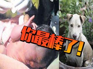一只流浪狗勇斗恶犬,竟然是为了救被遗弃在路边的婴儿!