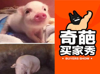 【奇葩买家秀】狗狗和小香猪养在一起,猪却莫名怀孕了!