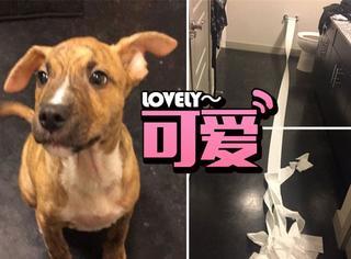 回家发现地上一堆卫生纸,知道真相后被狗狗萌化了