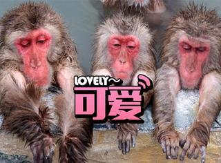日本公园的小猴子们泡温泉,姿态不一可爱到爆