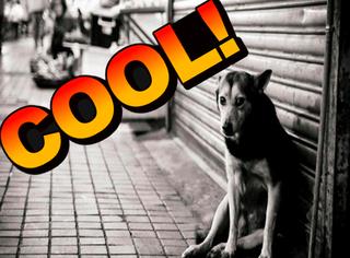 为什么德国街上看不到一只流浪狗?背后真相让人跪服!
