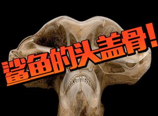 """鲨鱼的头盖骨竟然长这样!20张让你大开眼界的""""超惊奇照片"""""""