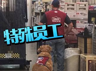 这家公司同时雇佣了男人和一只狗当员工