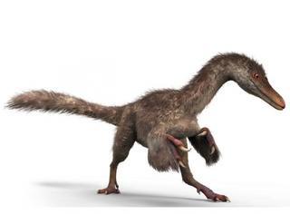 恐龙居然是长着羽毛的?!