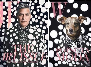 流浪狗狗登国际大刊封面,汪星人的时尚感逆天了!