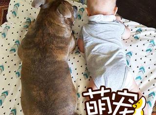 """【萌宠】把宝宝和""""恶犬""""养一起,这对夫妻真敢"""