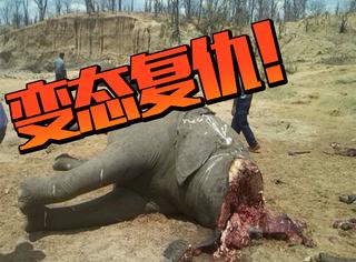 极尽变态的复仇!导致国家公园内22头大象一夜之间遭砍头惨死
