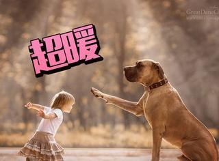 摄影师拍大狗和孩子,这画面太美