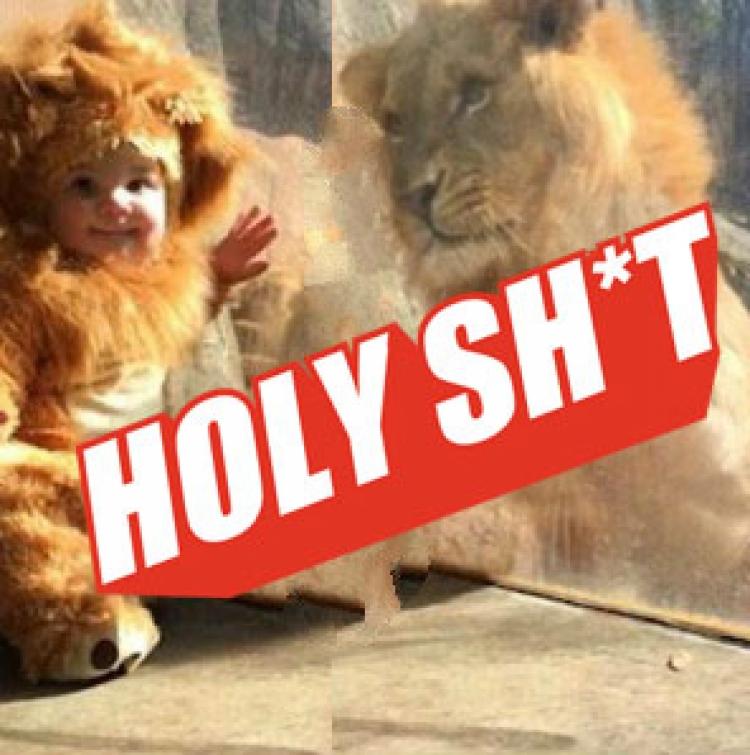 """激萌狮子装女婴隔着玻璃把这只""""无法无天""""的大家伙给萌翻了!"""