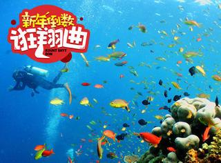 新年倒数狂翔曲12 | 2017年是时候来个潜水去数珊瑚咯