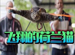 主人将猫咪残忍地绑在飞行器上,背后的原因竟然是...泪目!