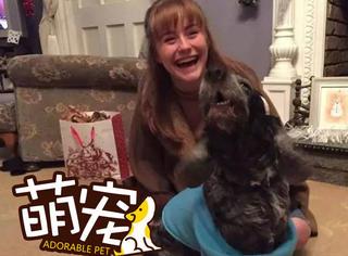 【萌宠】这家人为即将去世的狗狗提前庆祝圣诞节