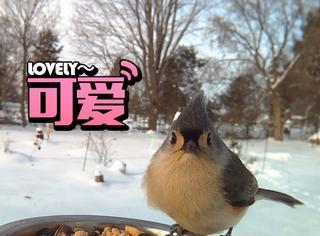 没想到你们是这样到鸟,有人用美食引诱偷拍到这样的照片
