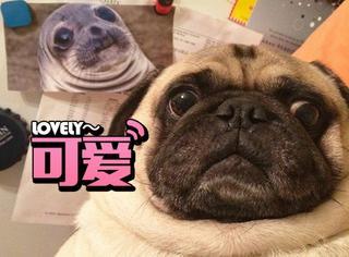 15张照片告诉你狗狗的表情比人类更会表达