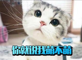 对于猫咪这种萌萌的生物真的是一点抵抗力都没有呢