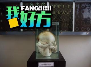这个博物馆有3000多个人脑,游客可以触摸观看