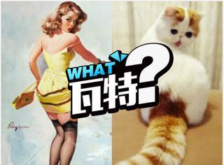 撞猫是一种什么体验,美女和猫只隔了一张照片