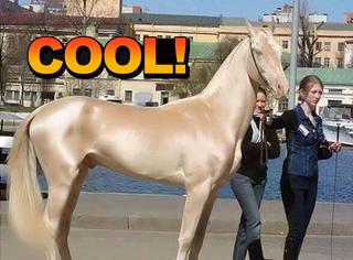 它是世界最漂亮的马,身价高达几千万!