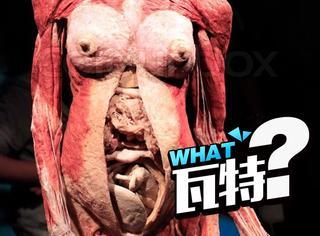 科学家在我们身上又发现了一个新器官,感觉有点厉害