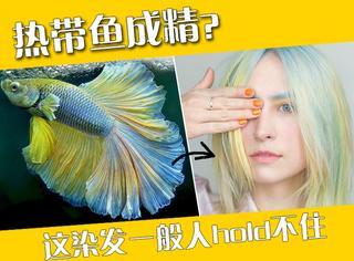 我原本并不是一只成精的热带鱼,直到我遇到了个染发师