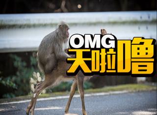 这只公猴不仅强奸母鹿、猫咪,竟然还登上了学术期刊!!!