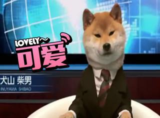 日本电视台让柴犬当新闻主播,看脸的世界卖萌就可以
