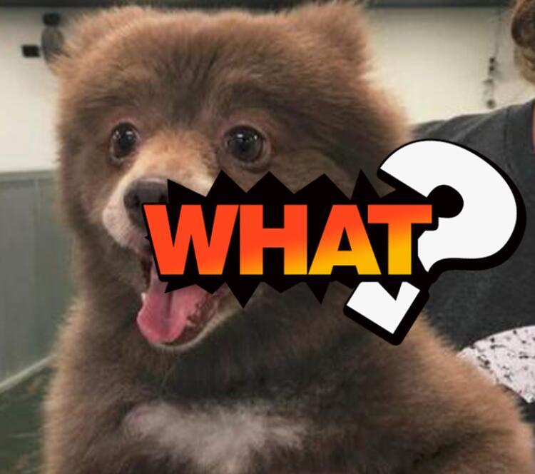 它到底是熊还是狗狗?